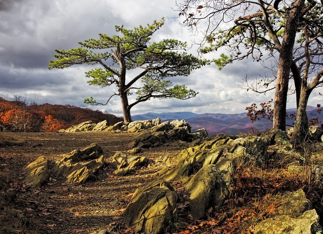 IMAGE: http://www.billpiperphotos.com/img/s/v-2/p1605762783-5.jpg